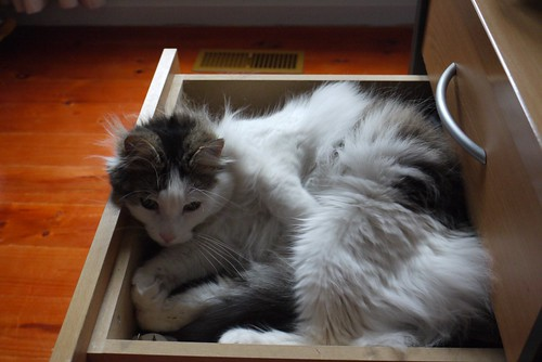 Abby in the drawer
