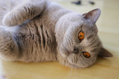 Cool Cute Cats images
