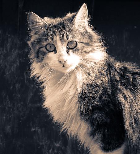 Nice Cats photos