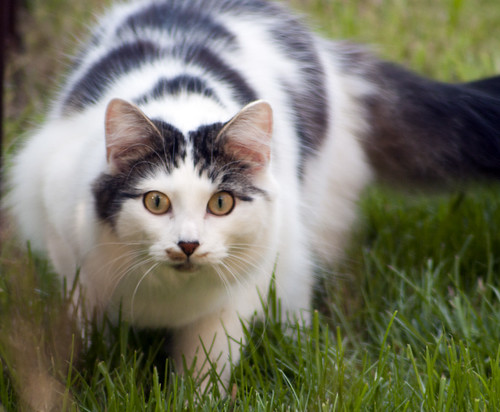 Nice Cats photos