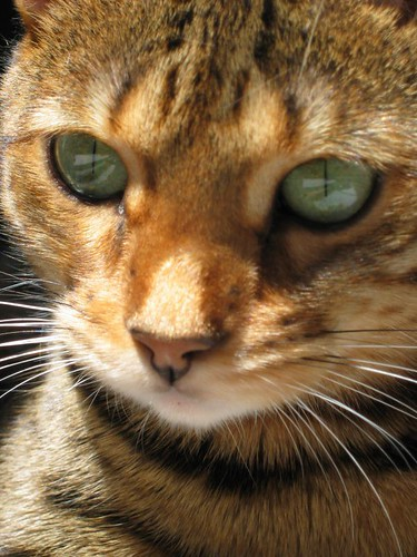 Cool Cats images