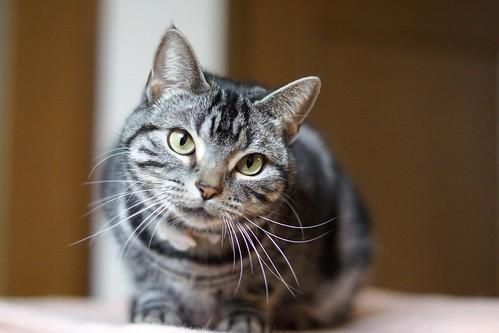 cat #286