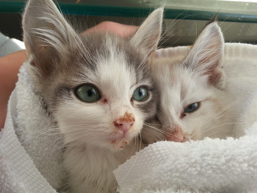 Post-Bath Kittens