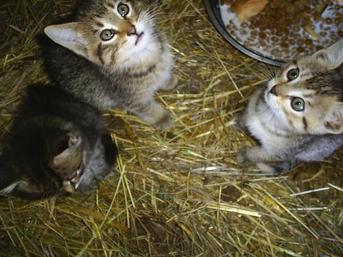 Nice Cute Cats photos