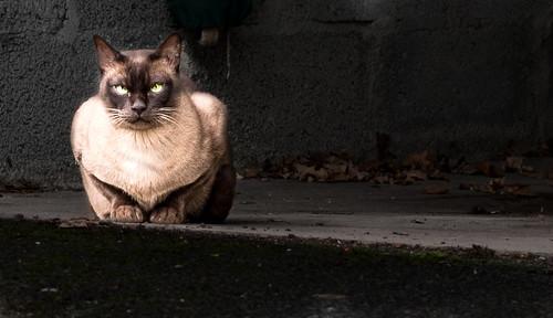 cat eyes-0070