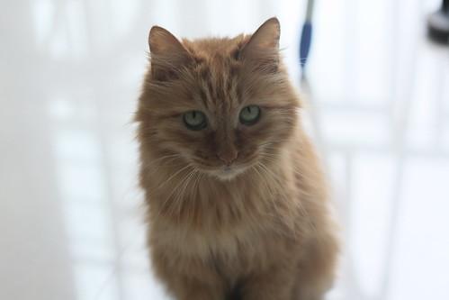 Cat 029