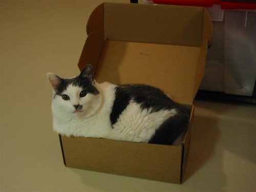 big cat small box