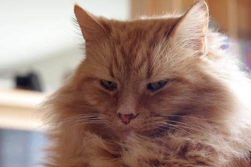 cat, winter '09