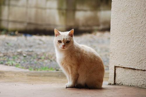 cats_2011-03-01_12