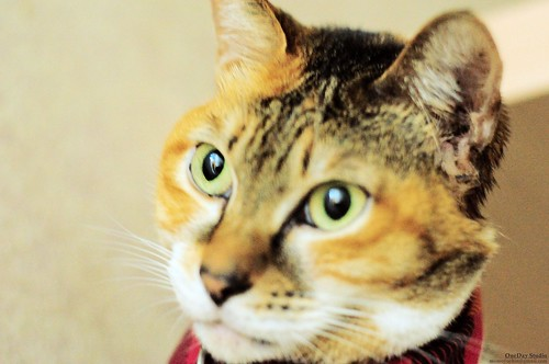 cat_TOBE