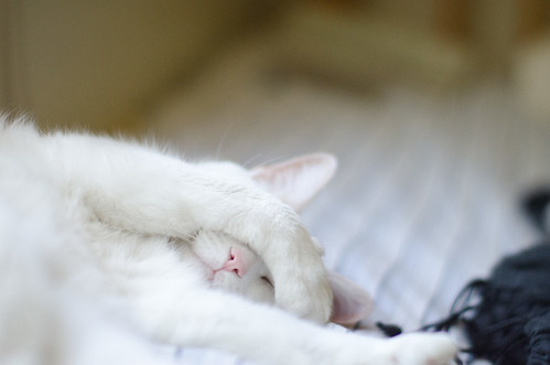 Soft Cat Scratch